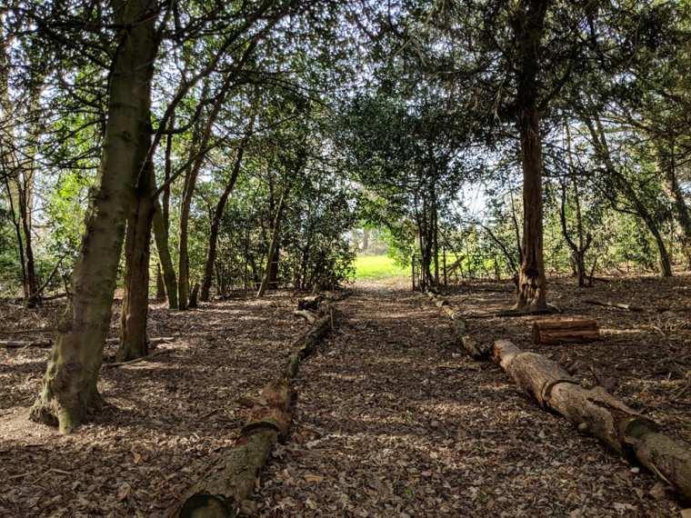 woods-path (2)